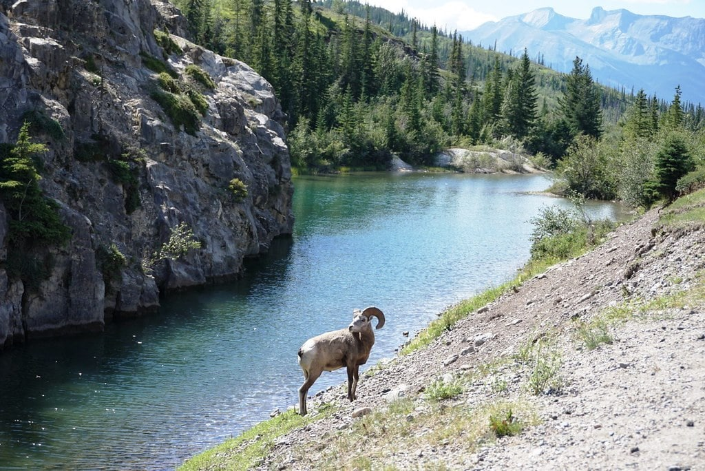 Wildlife, Canada